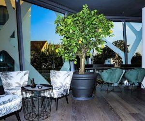 restaurant_lounge_lemon_tree
